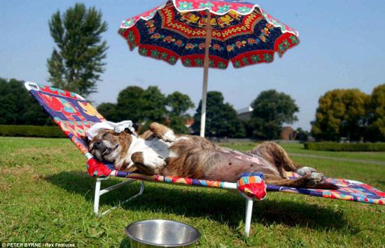 Những hình ảnh chống nóng ngộ nghĩnh của động vật (13)