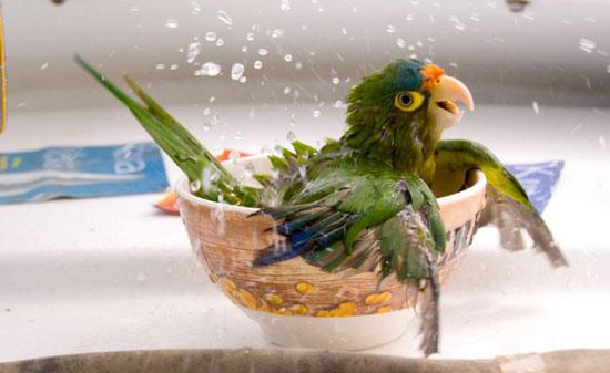 Những hình ảnh chống nóng ngộ nghĩnh của động vật (12)