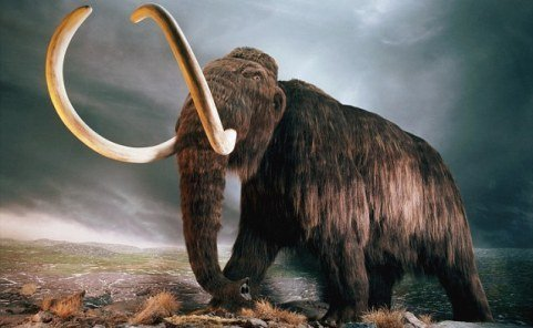 Voi mamut (ảnh minh họa)