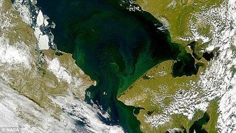 Thảm tảo khổng lồ này dài tới 100km