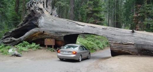 Đường hầm Log, California, Mỹ