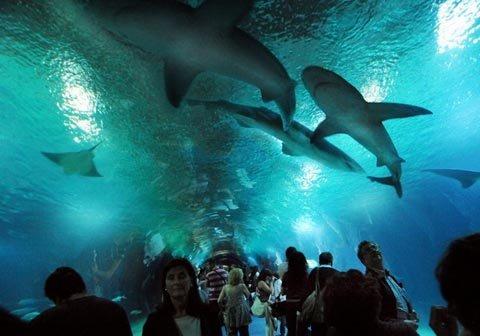 Đường hầm Cá, Tây Ban Nha