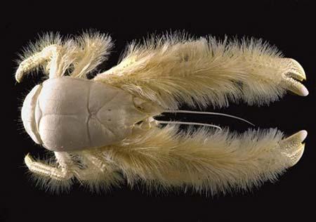 Thống kê các loài dưới biển