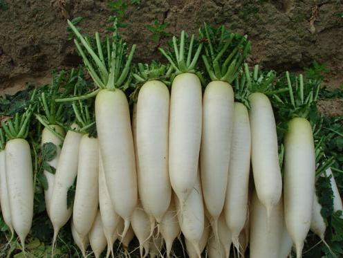 5. Củ cải trắng