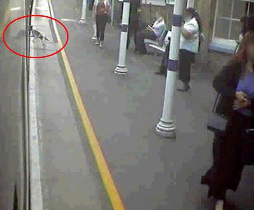 Camera ghi lại hình ảnh Frankie nhảy lên tàu
