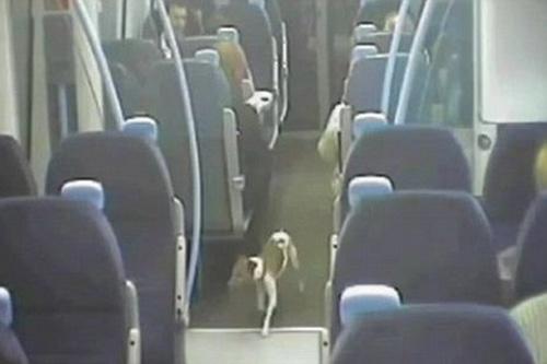 Frankie chạy dọc lối đi tìm chỗ ngồi