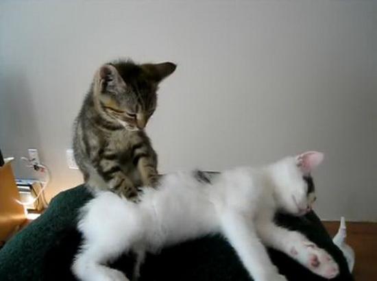 Những sự thật thú vị về mèo