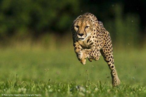 Báo Sarah chạy 100m trong vòng 5,95 giây
