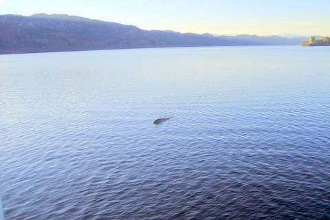 Bức hình chụp 'quái vật hồ Loch Ness. Theo ông Edward, bức hình này đã được một nhóm chuyên gia về quái vật 'của quân đội Mỹ kiểm định và xác nhận.