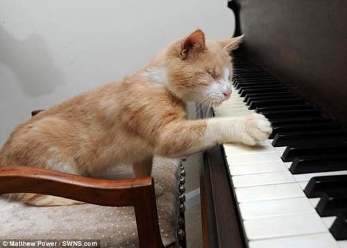 Chú mèo mù mê đàn piano (6)