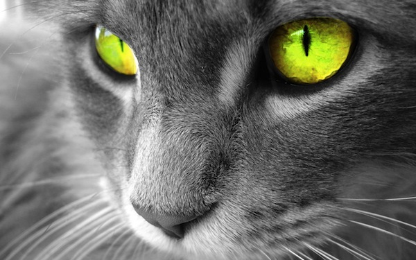 Mắt mèo