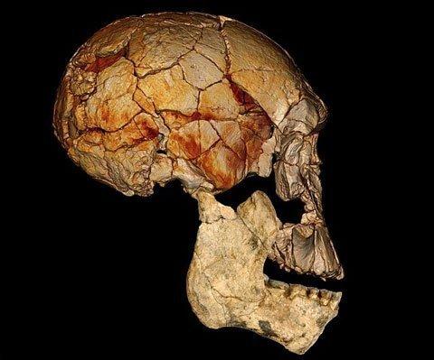 Hộp sọ được cho là của chủng người mới được phát hiện Homo rudolfensis. Ảnh: PA