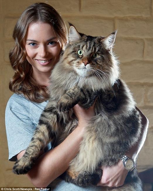 Chú mèo béo ú Rupert