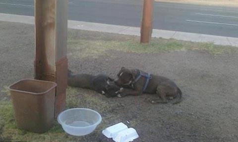"""Một con chó nằm lì bên 'bạn gái"""" qua đời vì tai nạn giao thông suốt 14 giờ đồng hồ. Người qua đường mang thức ăn đến cho nó nhưng nó không đụng đến. Sau đó, do không xác định chủ nhân, phòng quản lý động vật đã đưa con chó về trại chăm sóc động vật. Tại đây, con chó vẫn trong tình trạng buồn bã, chán nản, nó không uống gì. Bức ảnh đã nhận hàng nghìn lượt chia sẻ trên Facebook. Ảnh: Facebook."""