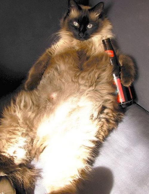 Ảnh vui mèo: những chú mèo béo dễ thương (11)