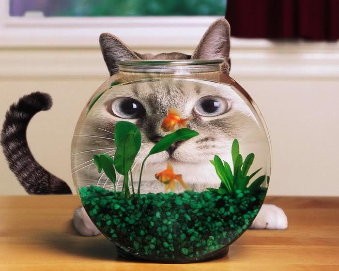 Ảnh vui mèo: những chú mèo béo dễ thương (2)