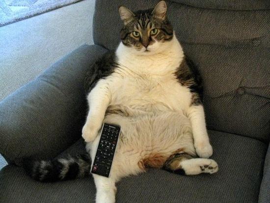 Ảnh vui mèo: những chú mèo béo dễ thương (10)