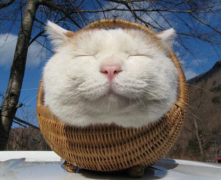 Ảnh vui mèo: những chú mèo béo dễ thương (8)