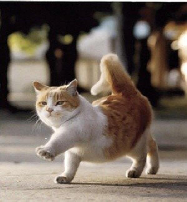 Ảnh vui mèo: những chú mèo béo dễ thương (5)