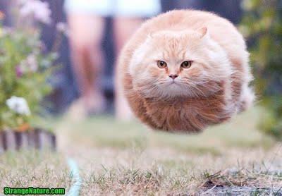 Ảnh vui mèo: những chú mèo béo dễ thương (4)