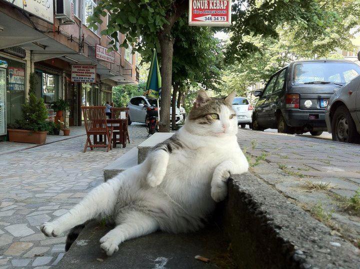 Ảnh vui mèo: những chú mèo béo dễ thương (3)