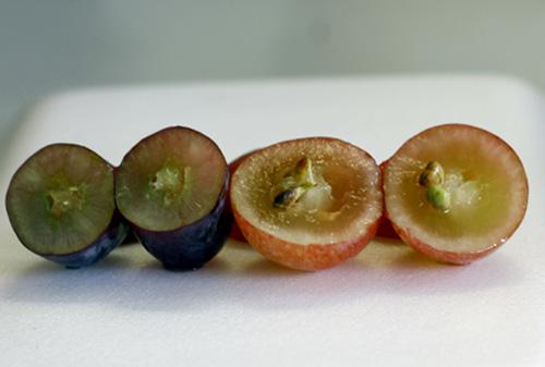 Khi bổ ra, nho Mỹ nhìn rất chắc thịt và không có hạt (trái) trong khi nho đỏ Trung Quốc có nhiều hạt và ruột khá rỗng, bóp vào thấy rất nhão (phải)