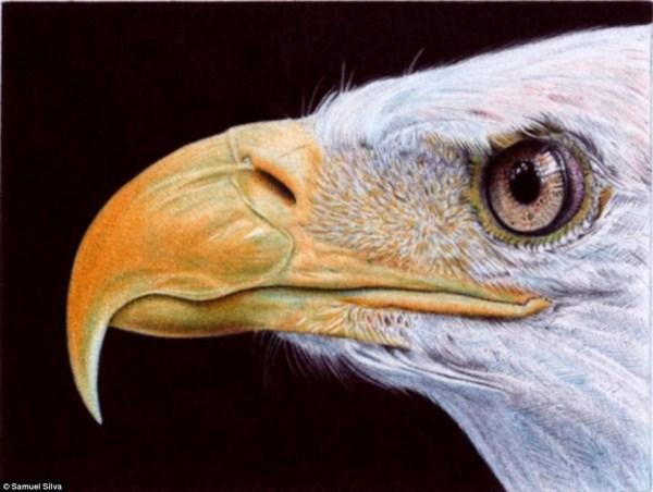 Sững sờ với kiệt tác tranh bằng bút bi (6)