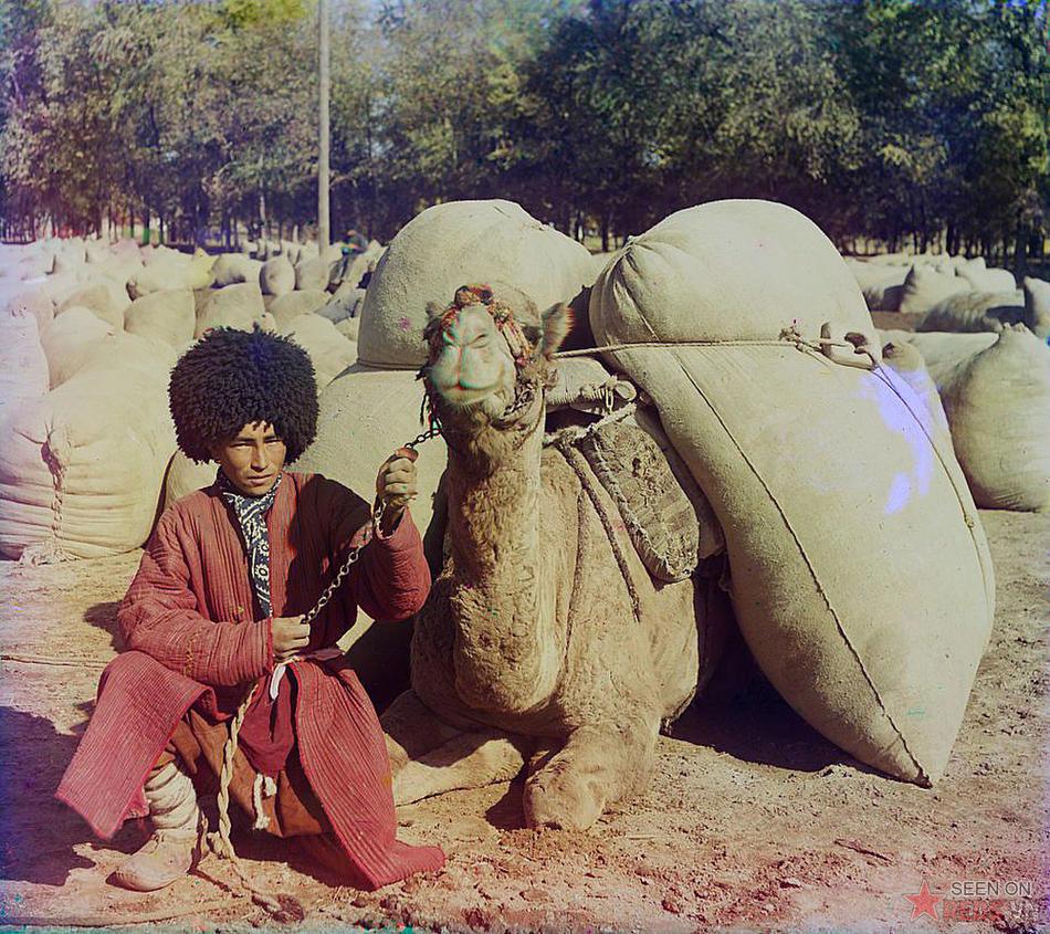 Người đàn ông và con lạc đà chất đầy các bao tải trên lưng nạp với gói, khoảng năm 1905 – 1915.