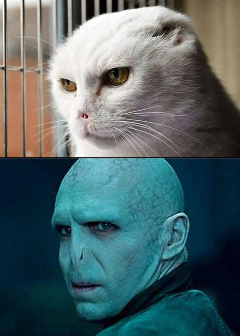 Voldemort, Kẻ-mà-ai-cũng-biết-là-ai-đấy.