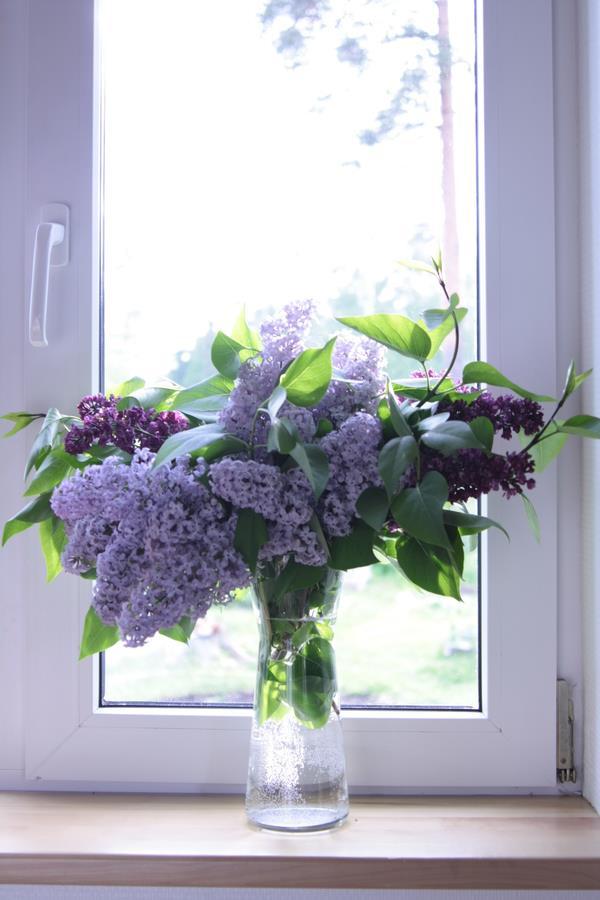 Dịu dàng sắc tím của hoa Tử Đinh Hương ♥ (1)