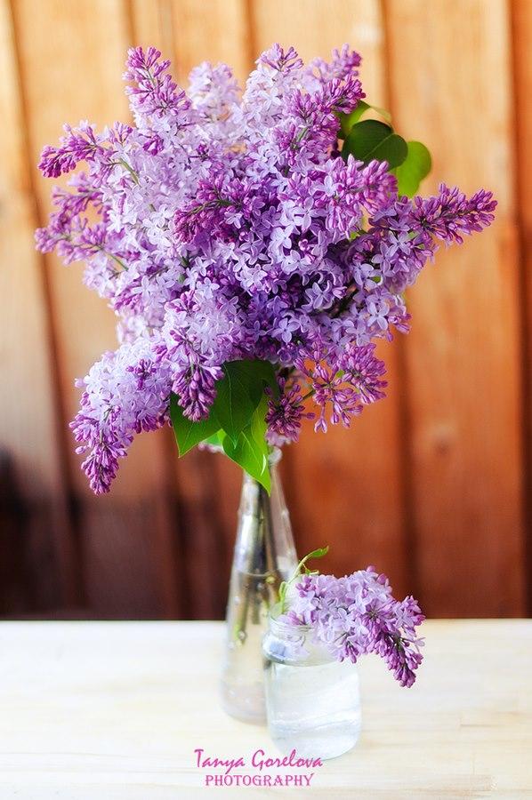 Dịu dàng sắc tím của hoa Tử Đinh Hương ♥ (16)
