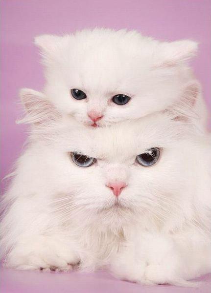 Hãy cùng ngắm những hình ảnh cực kì tình cảm của bé mèo mẹ và các bé mèo con nhé (1)