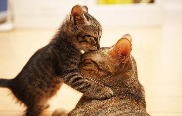 Hãy cùng ngắm những hình ảnh cực kì tình cảm của bé mèo mẹ và các bé mèo con nhé (5)