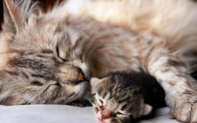 Hãy cùng ngắm những hình ảnh cực kì tình cảm của bé mèo mẹ và các bé mèo con nhé (3)