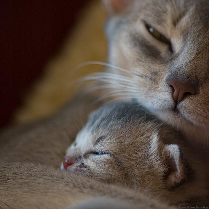 Hãy cùng ngắm những hình ảnh cực kì tình cảm của bé mèo mẹ và các bé mèo con nhé (11)