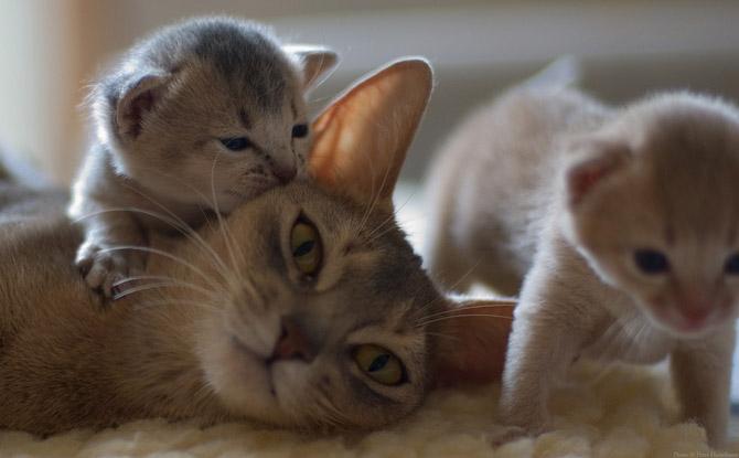 Hãy cùng ngắm những hình ảnh cực kì tình cảm của bé mèo mẹ và các bé mèo con nhé (10)