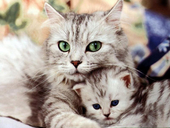 Hãy cùng ngắm những hình ảnh cực kì tình cảm của bé mèo mẹ và các bé mèo con nhé (7)