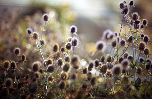 Nàng Thu lả lướt trên những cành hoa (17)