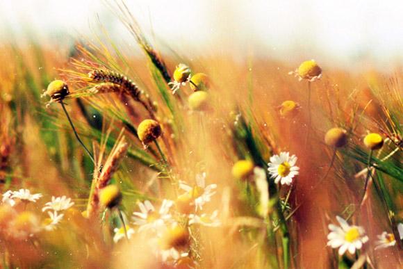 Nàng Thu lả lướt trên những cành hoa (8)
