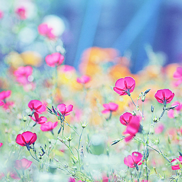 Nàng Thu lả lướt trên những cành hoa (7)