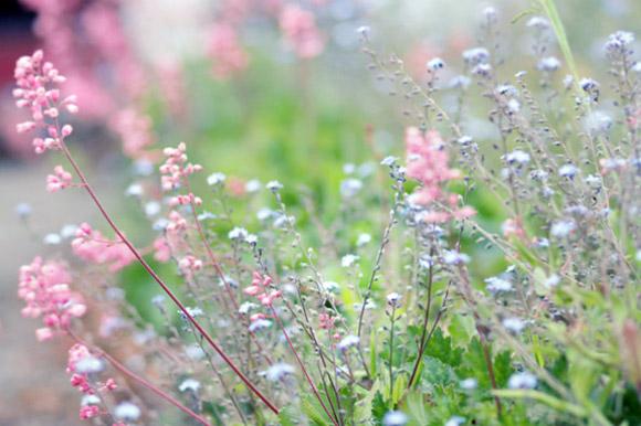 Nàng Thu lả lướt trên những cành hoa (6)