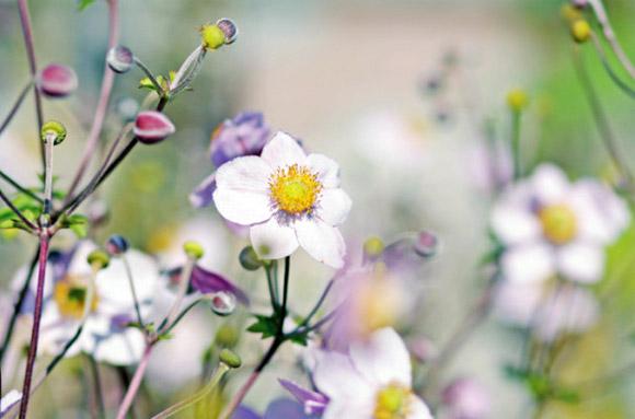 Nàng Thu lả lướt trên những cành hoa (5)