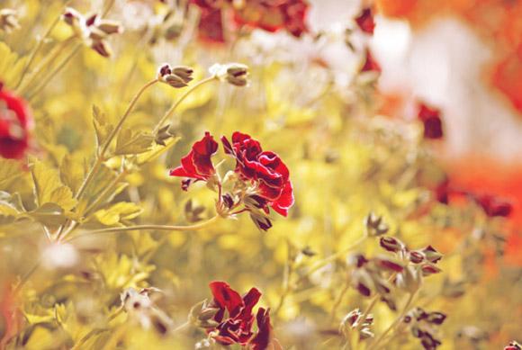 Nàng Thu lả lướt trên những cành hoa (4)