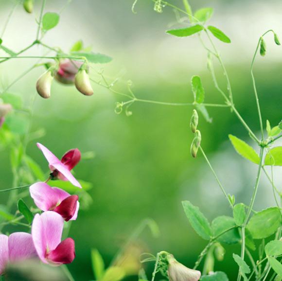 Nàng Thu lả lướt trên những cành hoa (3)