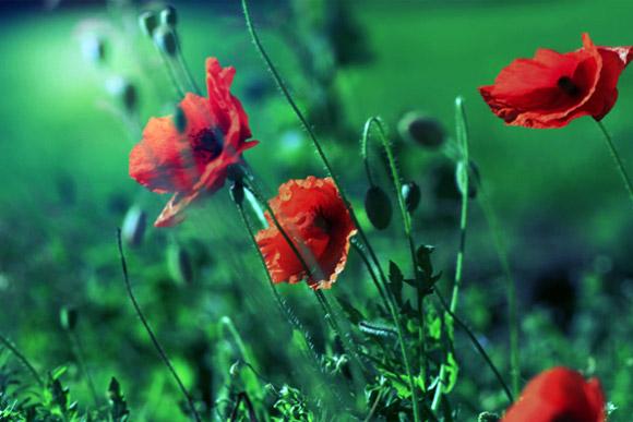 Nàng Thu lả lướt trên những cành hoa (2)