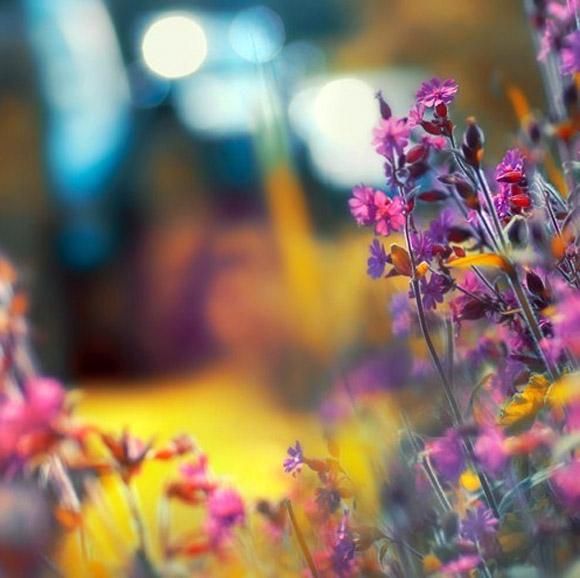 Nàng Thu lả lướt trên những cành hoa (1)