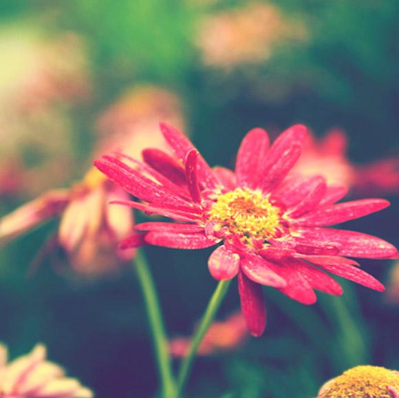 Nàng Thu lả lướt trên những cành hoa (16)