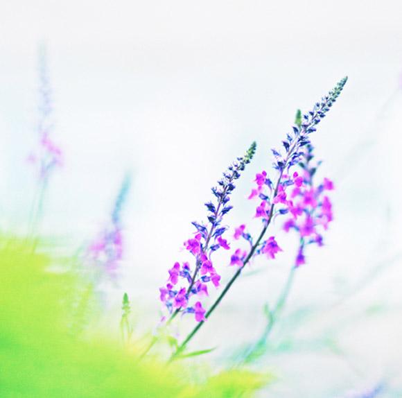 Nàng Thu lả lướt trên những cành hoa (15)