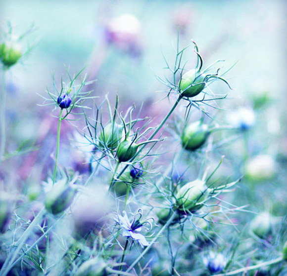 Nàng Thu lả lướt trên những cành hoa (14)