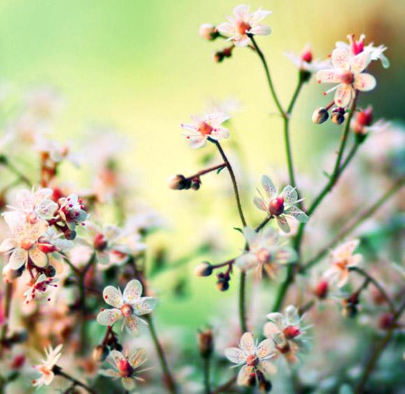 Nàng Thu lả lướt trên những cành hoa (13)